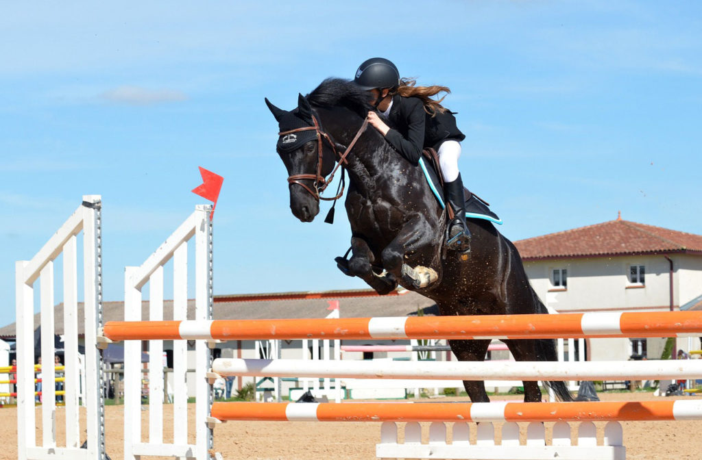 cheval concours equin novial